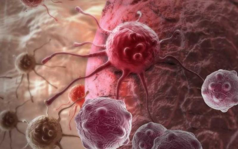 Priroda liječi rak, ali kako kad i kako kome
