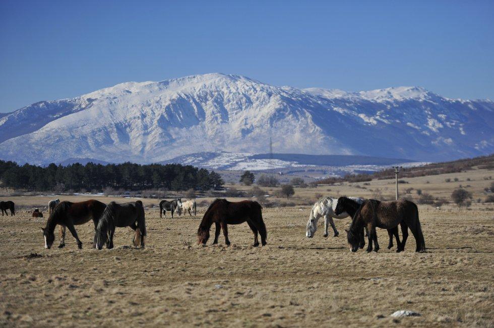 Divlji konji - Livno