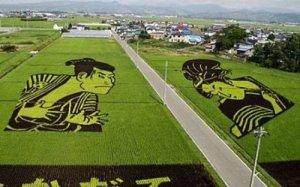 Rižina polja Japana