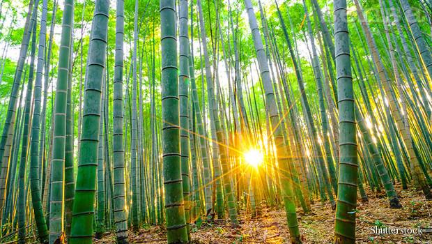 Boja Bambusa /zen priča/