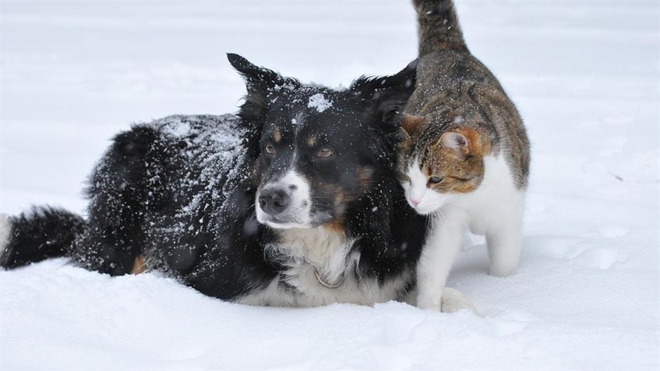 Psi iscjeljuju srce, a mačke um