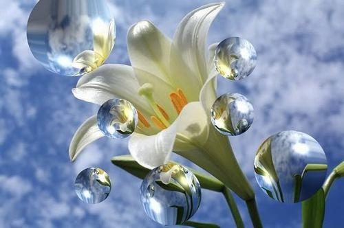 Bog i cvjeće