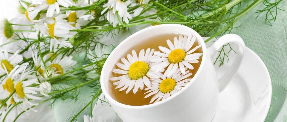 Kamilica je navažnija biljka u kućnoj ljekarni, a mi imamo recept za oblog