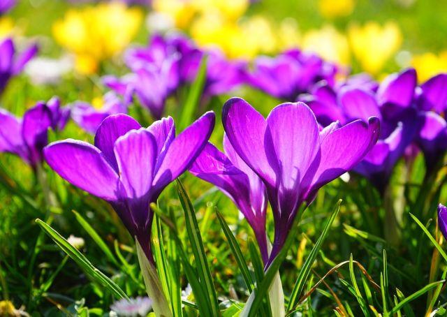 Proljetni savjeti za zdravlje i ljepotu
