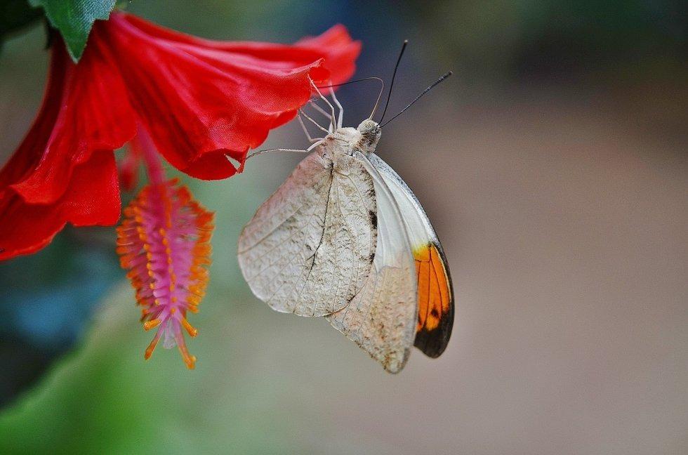 Ljepota leptira
