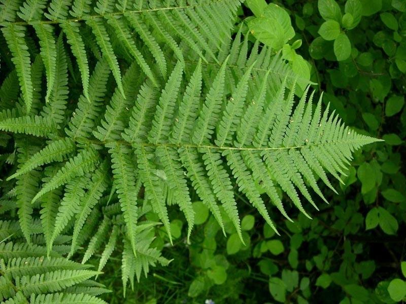 Napunite jastučnicu ovom biljkom: Bolovi u kostima i kičmi nestaju preko noći