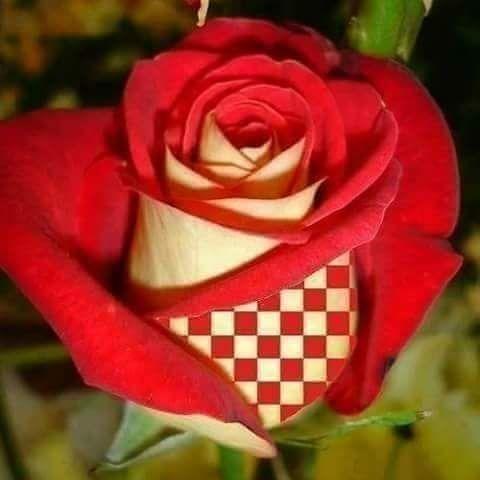 Prljavo Kazaliste - Mojoj Majci (Ruza Hrvatska)
