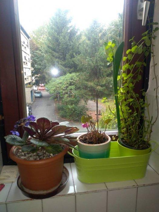 Kako su moje biljke preživjele moj godišnji odmor