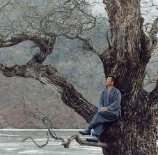 Sjedim pod stablom
