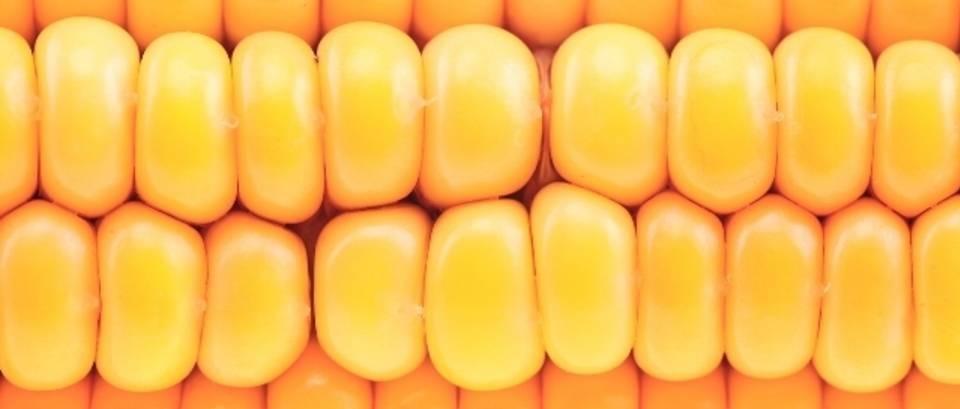 Kukuruz - klip pun ugljikohidrata, vitamina i minerala