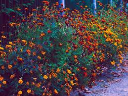 Najdraža jeseni