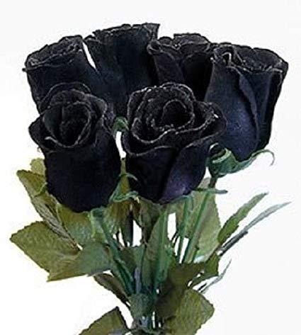 ŠTO MI GOVORI MOJ SAN? - Ovo su samo fragmenti iz sna: Buket crnih ruža
