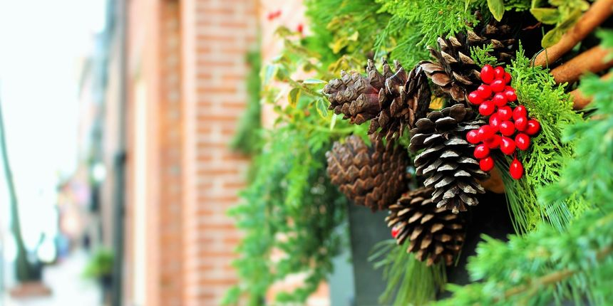 Zimski solsticij - Tri su biljke simbolički snažno povezane s adventom
