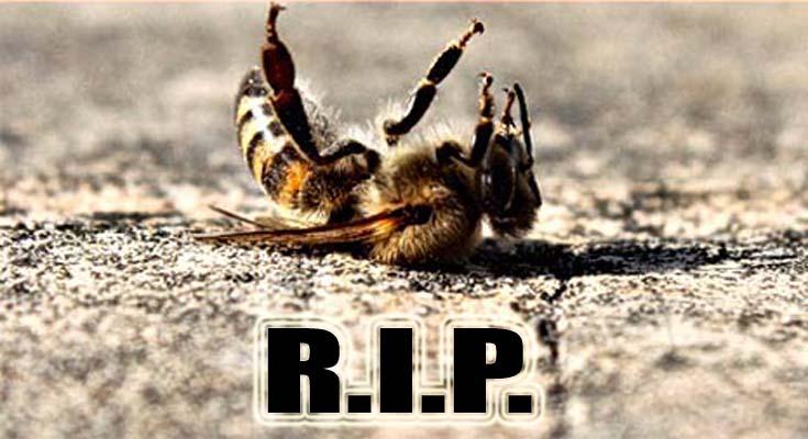 PRVO DUGOROČNO ISTRAŽIVANJE POTVRDILO: Najpopularnijih svjetski pesticid ubija pčele na cijeloj planeti
