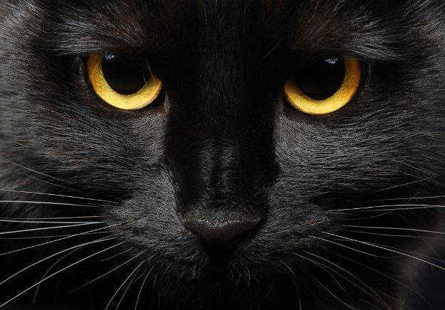 ŠTO MI GOVORI MOJ SAN? - Sanjala sam kako imamo kućnog ljubimca mačora