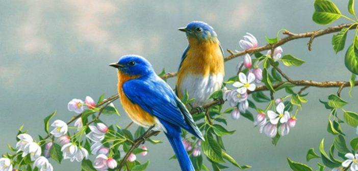 Svaka ptica svome jatu leti