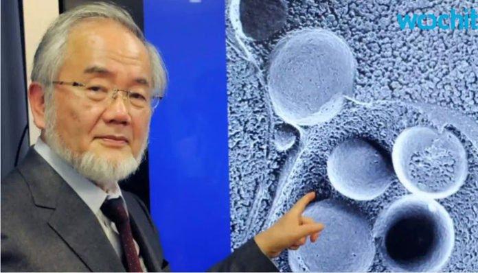 Dobitnik Nobelove nagrade za medicinu: Kako pomladiti organizam i spriječiti opasne bolesti!