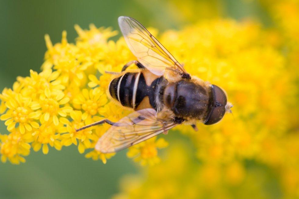 O MEDU I BIĆU PČELA I PČELARSTVU