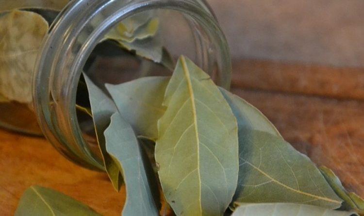 Čaj od lovorovog lista protiv gripa i bronhitisa