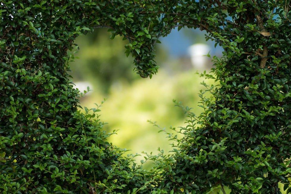Bosanska ljubavna poezija
