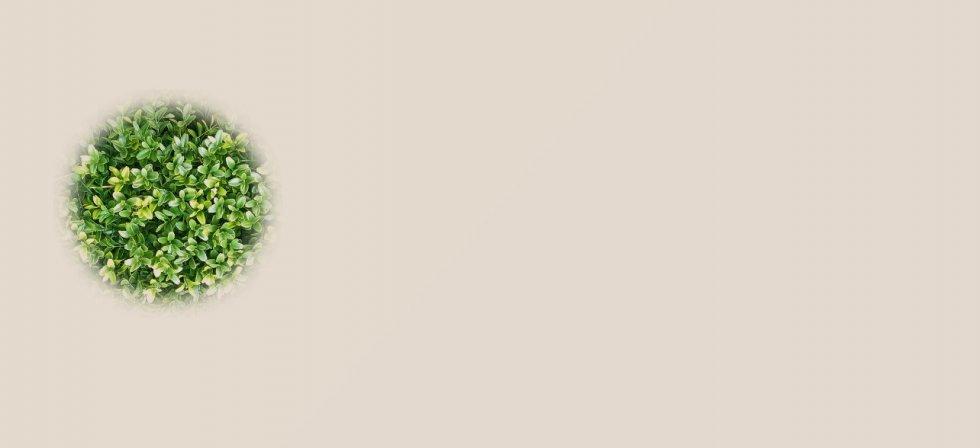 Ljekovito bilje i ljekovite trave II