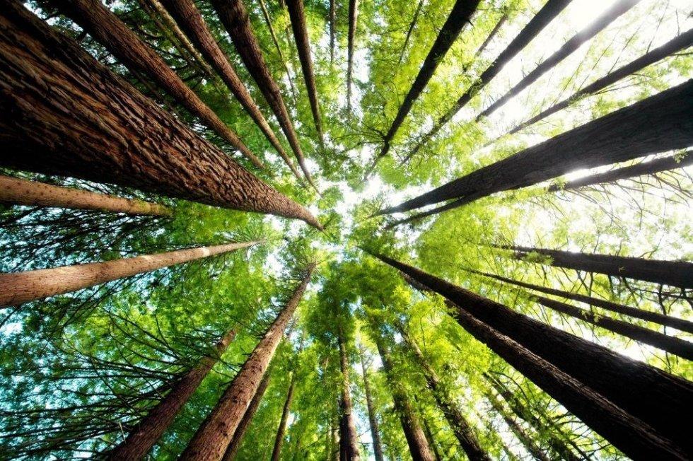ZASADI DRVO, ZASADI SVOJ KISEONIK: Čuvajmo šume