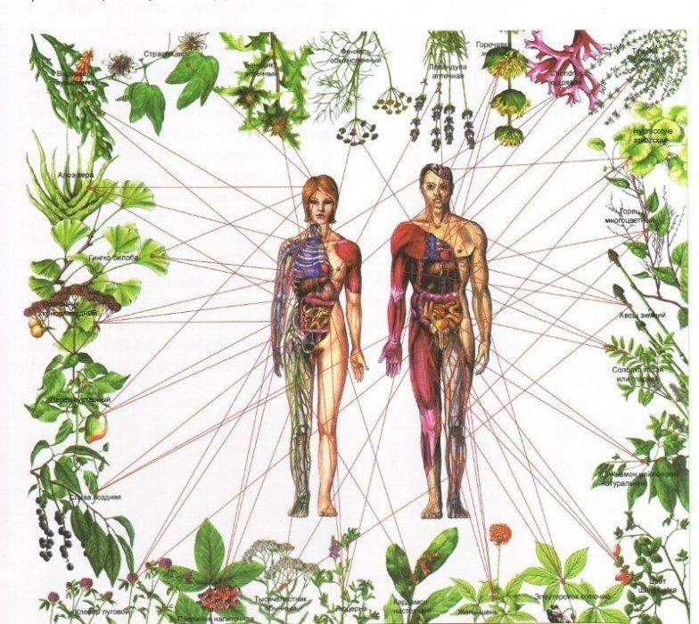 Biljke koje iscjeljuju sedam čakri u tijelu