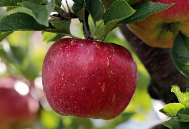 Svjetski dan jabuka - kraljica voća u prehrani