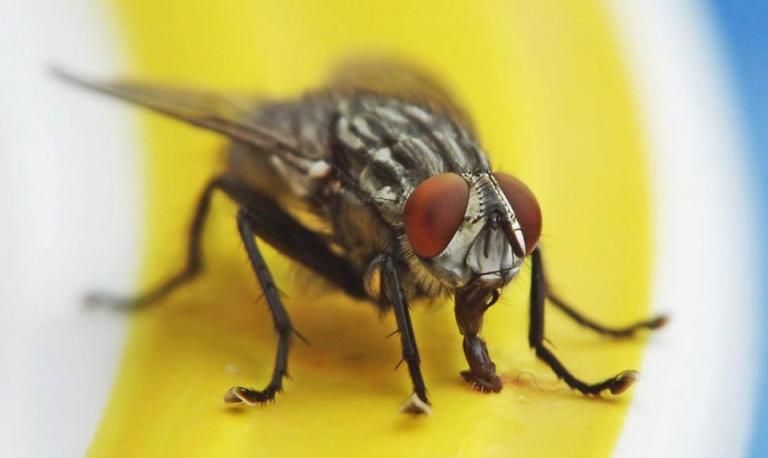 Ne ubijajte muhe čekićem