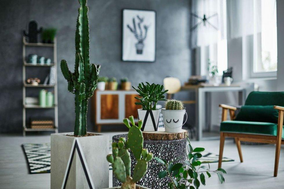 14 biljaka koje će preživjeti jesen i zimu