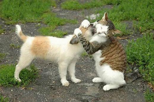 Broje se samo poljupci i zagrljaji -:)