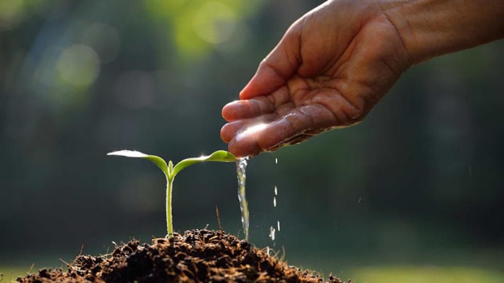 Vegeterijanstvo - prvi korak ka pročišćenju !
