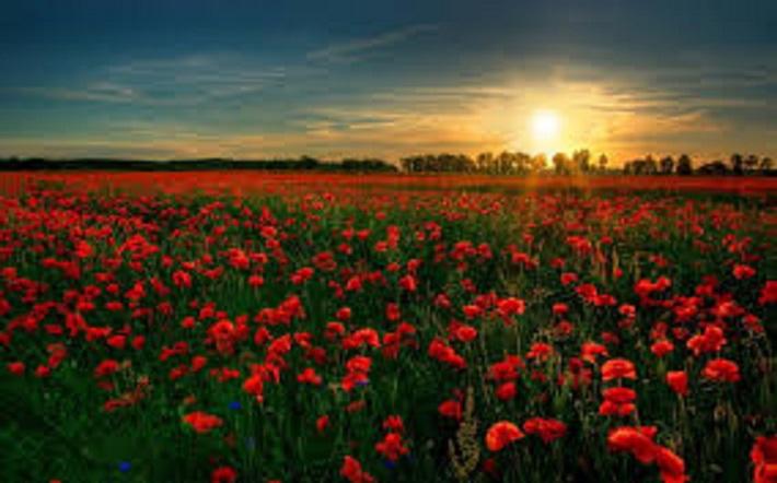 Besplatno tumačenje snova - Turmalino (ruže, put, more, kiša, sestra ....)