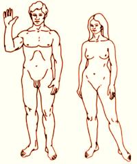 ČOVJEK - Životni ciklus čovjeka