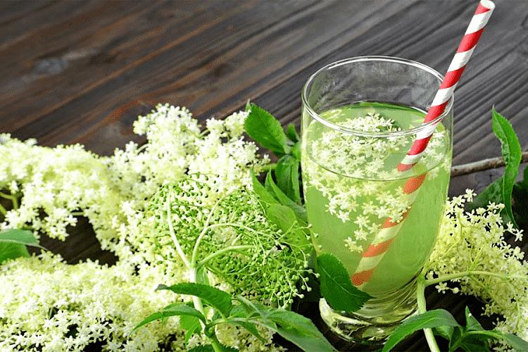 DIJELITE DALJE: Ovo je Božja biljka koja može da zamjeni sve lijekove – KORISTITE JE