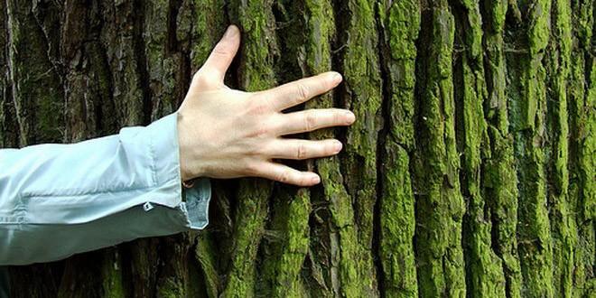 Drvo koje liječi: Sve tajne dendroterapije