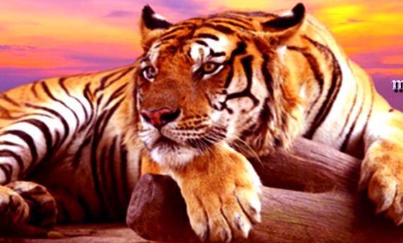 Besplatno tumačenje snova -  ShadowOfSoul (tigrica, spavanje, buđenje, agresija, rastavljanje na dijelove)