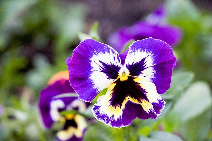 Tužan je cvijetu svijet bez ljudi...