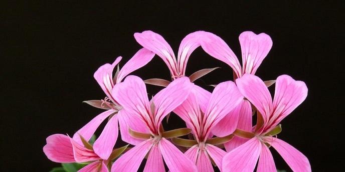 Koje cvijeće cvjeta u lipnju i koje je otporno na jako sunce?