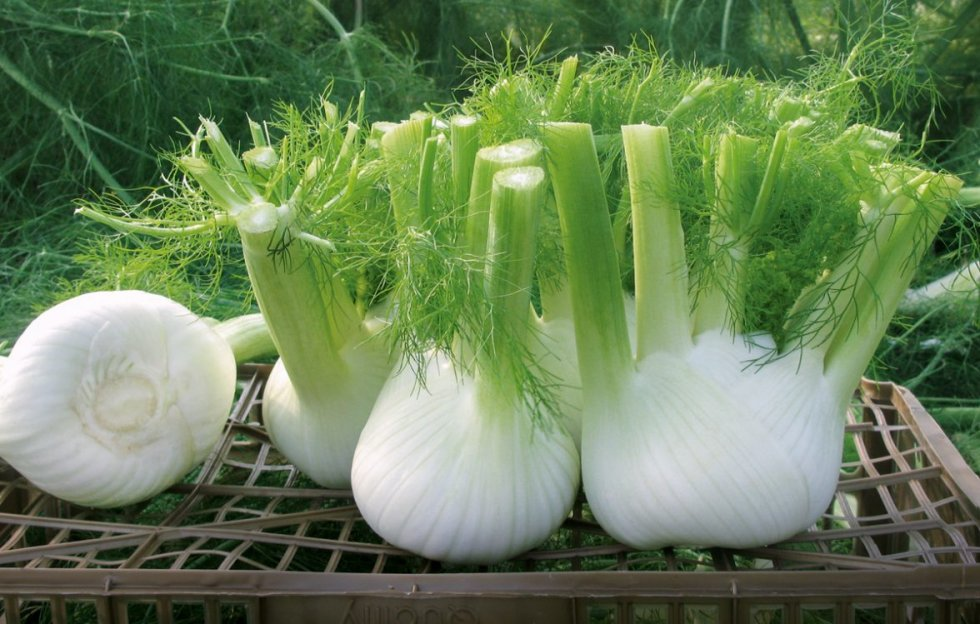 Vegetarijanska kuhinja - Koromač s krumpirom