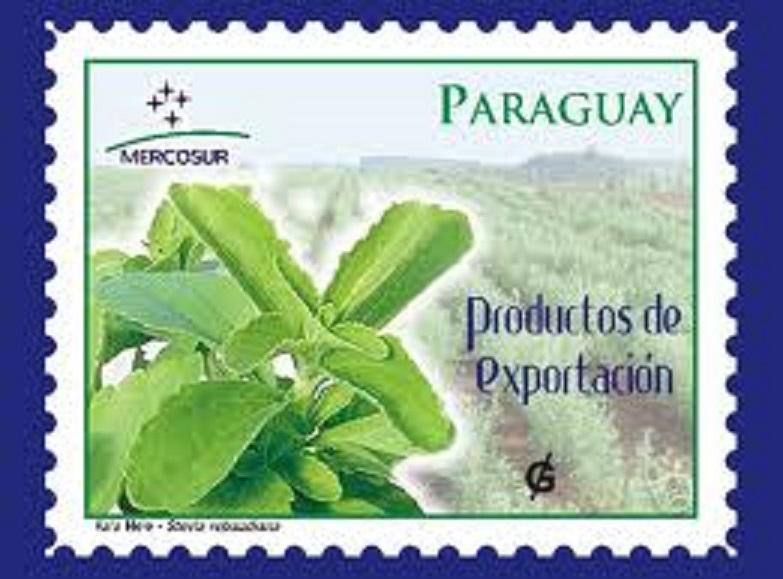Stevia Rebaudiana - zabranjena biljka?