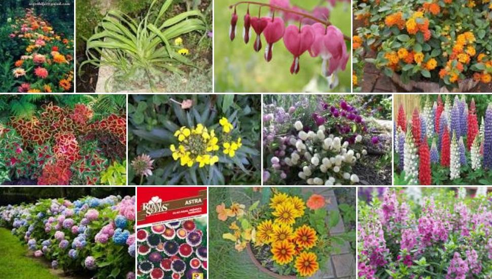 Starinsko vrtno cvijeće: Što su to u vrtove sadile naše mame i bake?