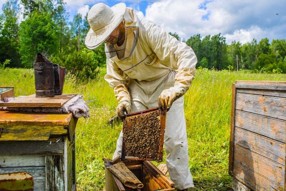"""Neće """"korona"""" na pčelara!"""
