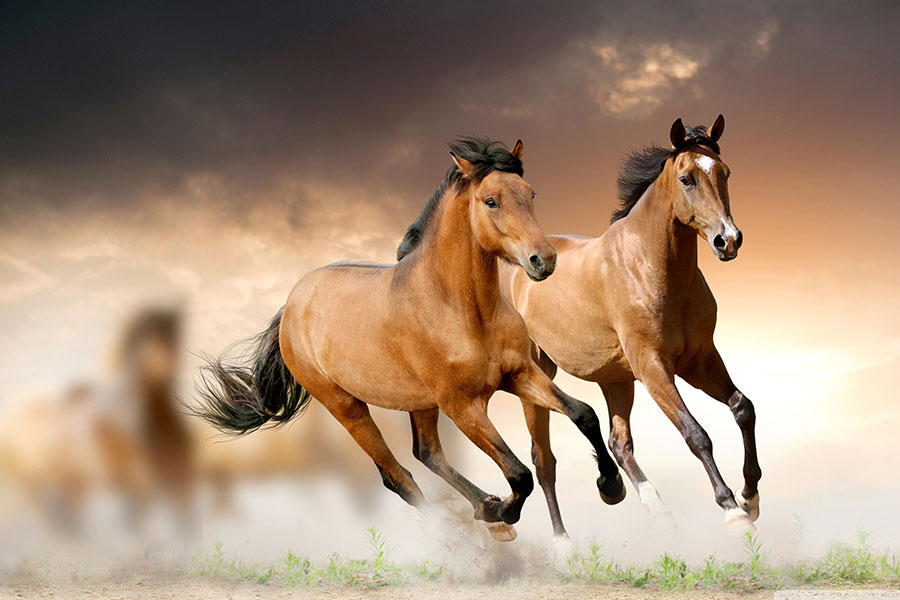 Konj – čovjekov plemeniti pratilac