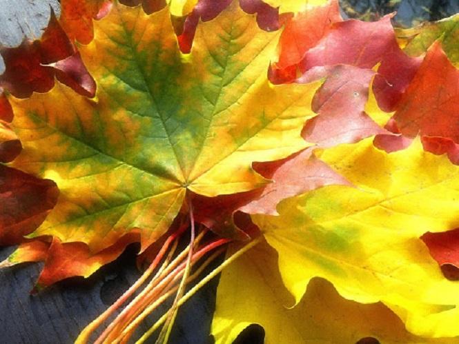 Zlatna zora u 23h: Što vam donosi jesen? + Anđeoske poruke + Sretni brojevi