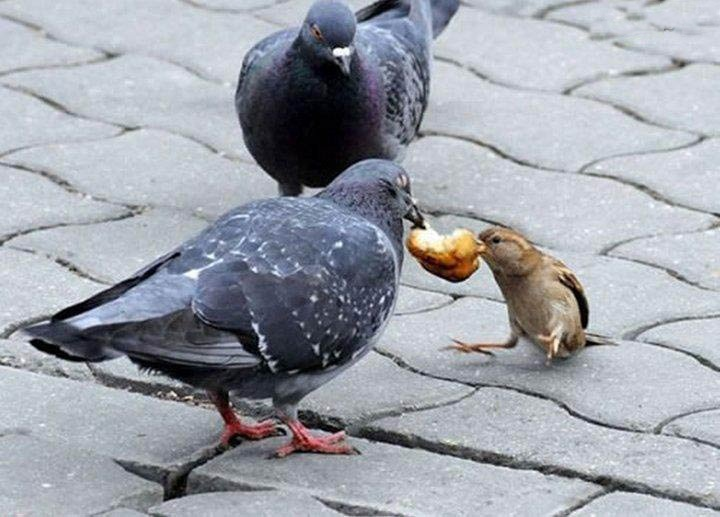 Adventske priče - Golub i Vrabac...