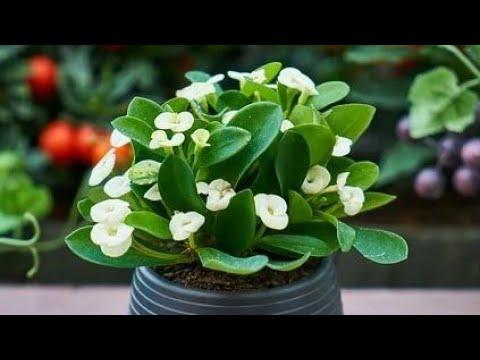 Ako hoćete da vam cveće živne, brže raste bude zdravo i lepo pospite ga ovim prahom
