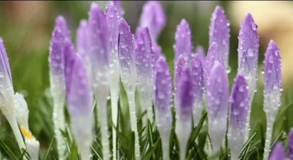 Proljeće - zima
