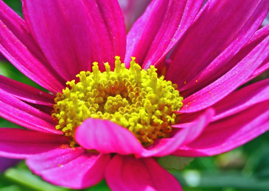 Moć nektara