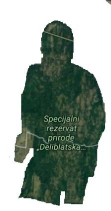 Div u Deliblatskoj peščari